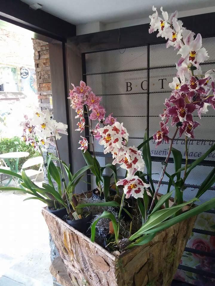 Qué decir de la ciudad de la eterna primavera y de los hoteles en Medellín